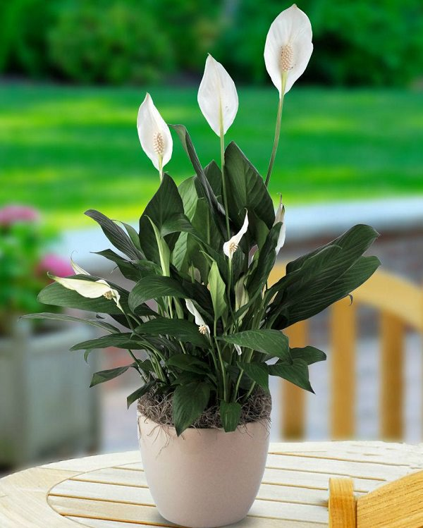 12 plantas de sol para el verano decogarden for Plantas para jardineras al sol